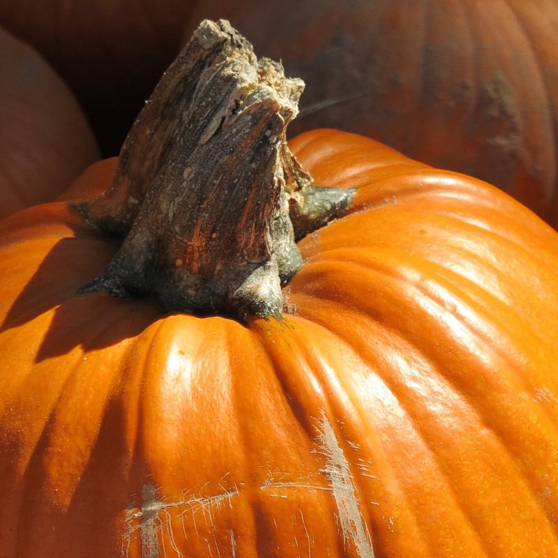 No tires las semillas de calabaza despúes de tallarla. Mejor cómetelas. Son super nutritivas.