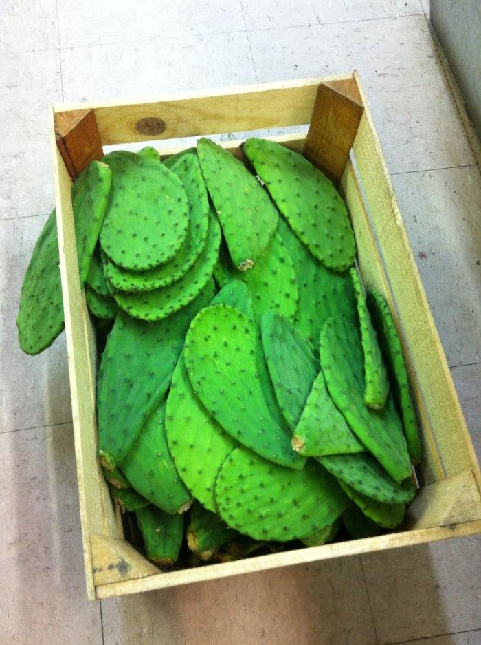 Nopales en tienda mexicana