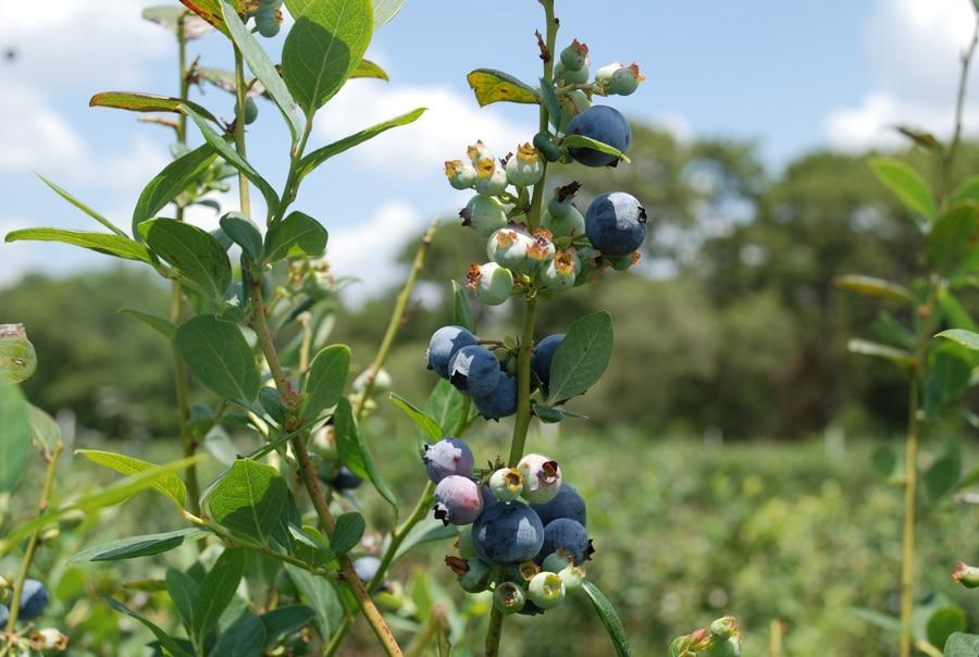 Ventajas y beneficios de una alimentación basada en plantas